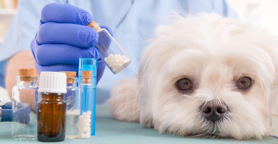 lhomeopathie-aussi-pour-votre-chien