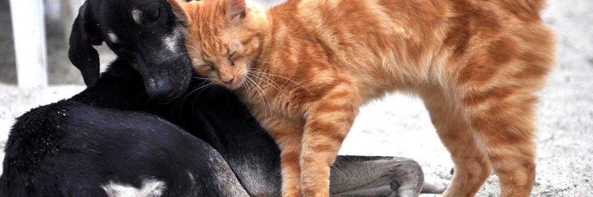 cohabitation chien et chat