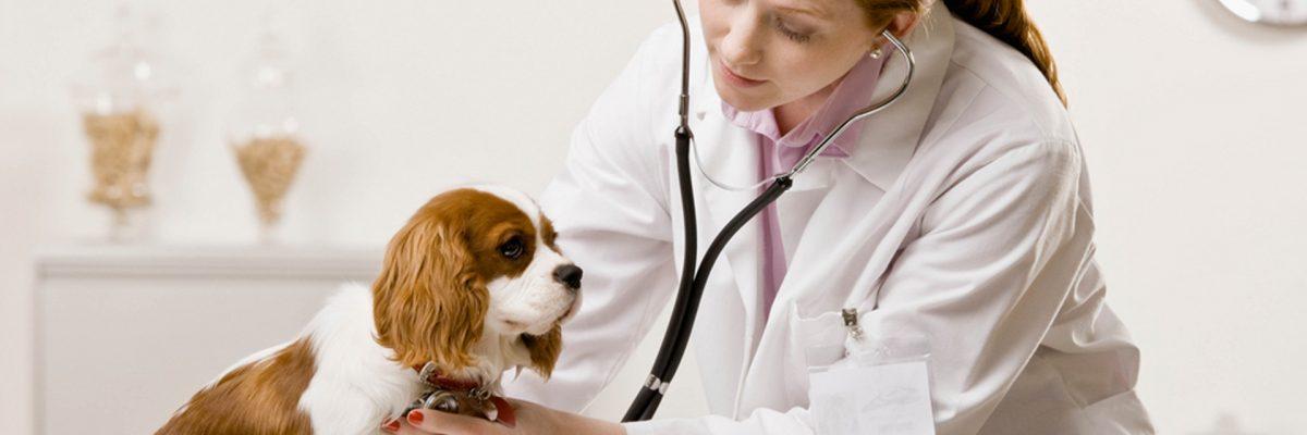 assurance-sante-pour-chien