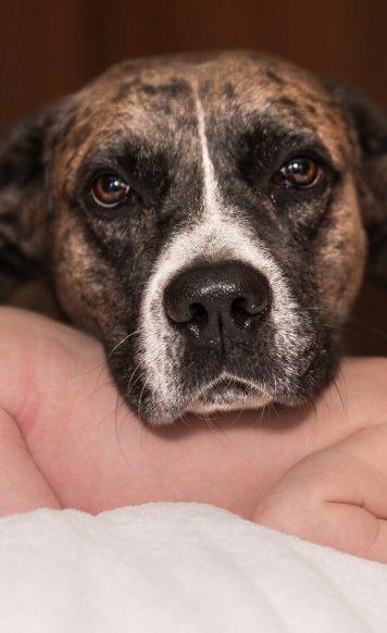 avoir-un-bebe-et-posseder-un-chien-deux-choses-plus-que-compatibles